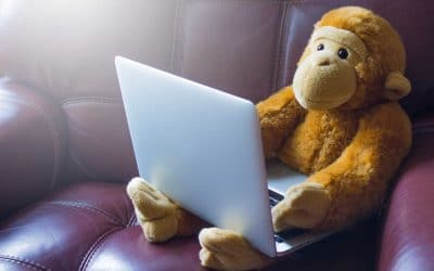 Why Teachers and Entrepreneurs Should Go Bananas for PicMonkey